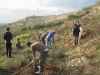 Planting the olives