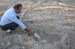 Watering Olive Trees in Sebastiya
